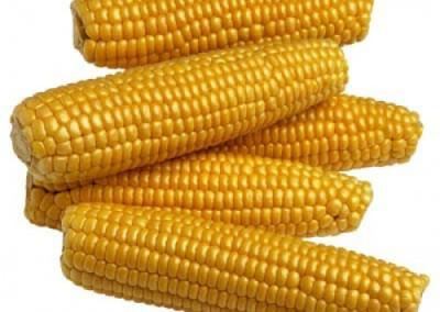Pourquoi subventionne-t-on le maïs (2014) ?